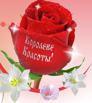 Красивые Картинки Розы Нежные
