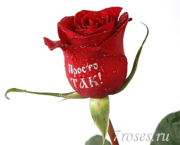 Доставка розы в биробиджан